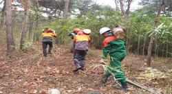 충남도 462억원 투입 산림 14개 분야 공공일자리 2533개 만든다